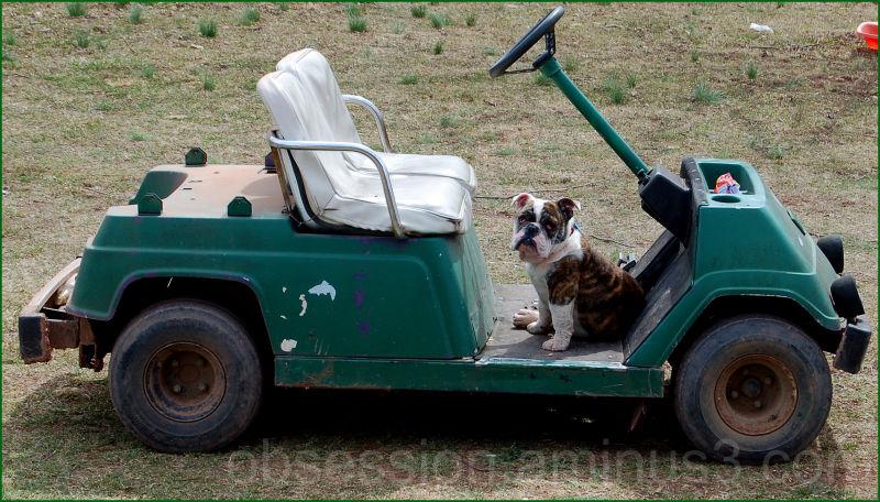 I'll drive!