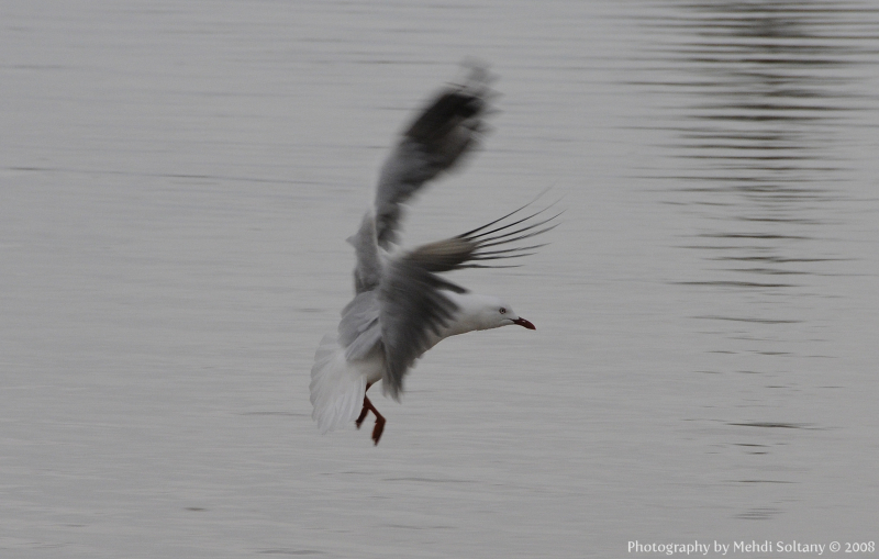 Seagal Flying