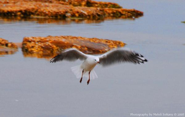 Seagal Landing