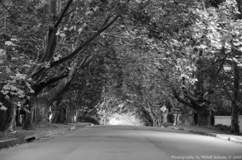 Memorial Road