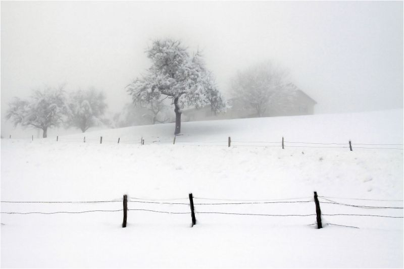 Brumes hivernales
