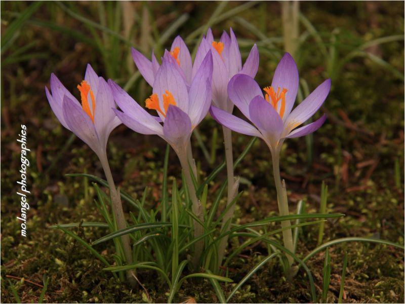La petite chorale du printemps