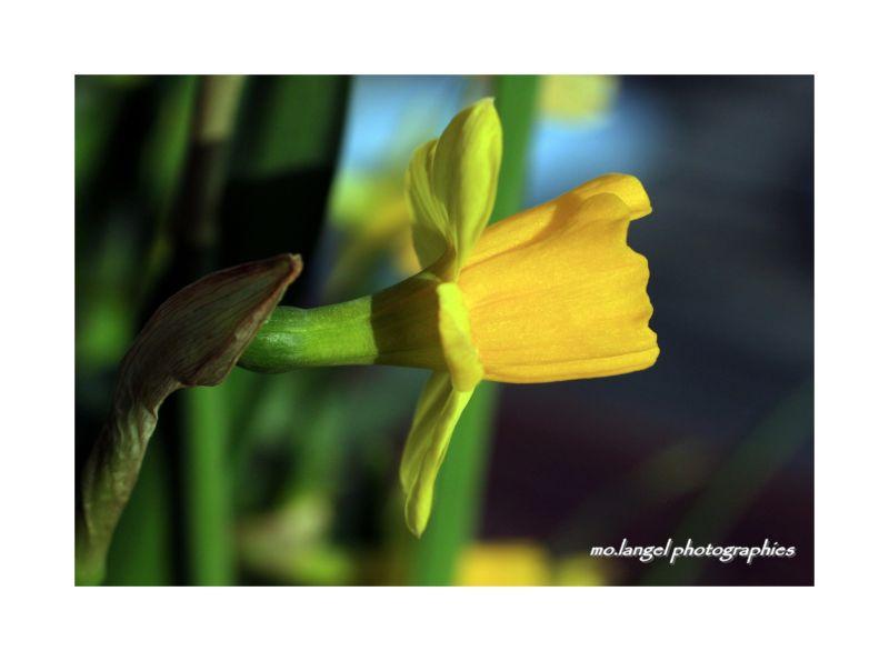 Spring flower!