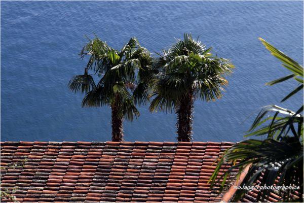 Duo sur le toit