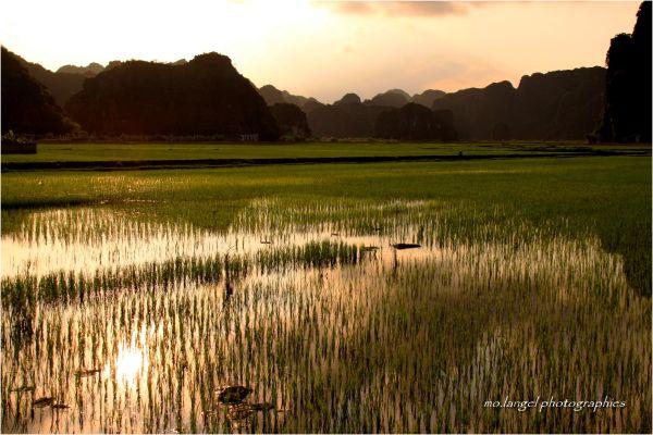 Fin de journée dans les rizières
