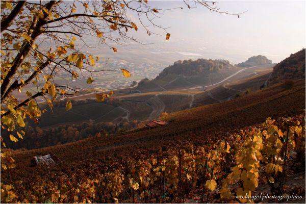 Les vignes du Valais