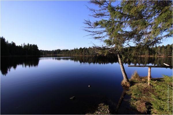 Au bord de l'étang II