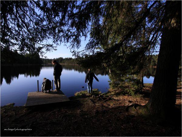 Au bord de l'étang III