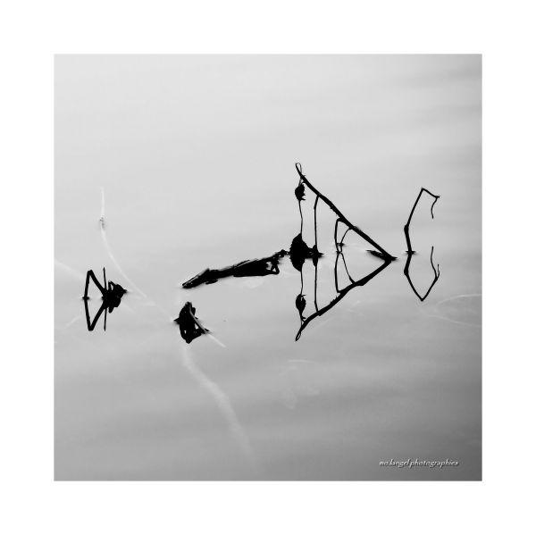 Hiéroglyphes sur l'étang