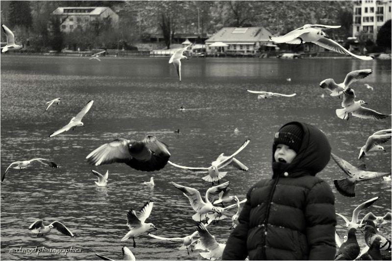 L'enfant parmi les oiseaux
