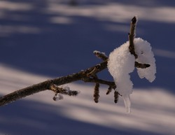 L'hiver suspendu à une branche
