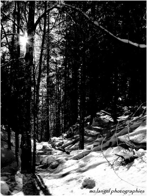 Petite étoile de la forêt