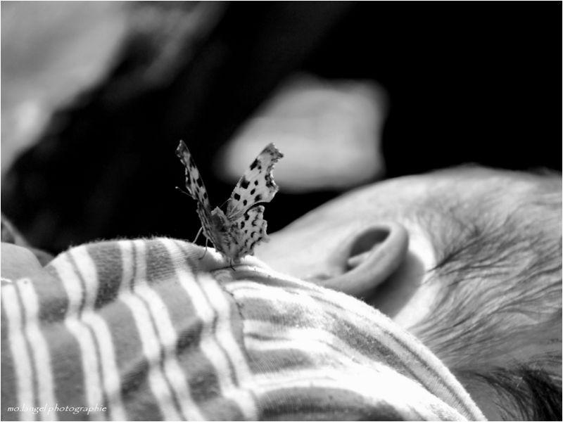 Le papillon qui murmurait à l'oreille du bébé