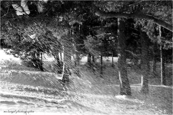 Quand la neige s'échappe des arbres