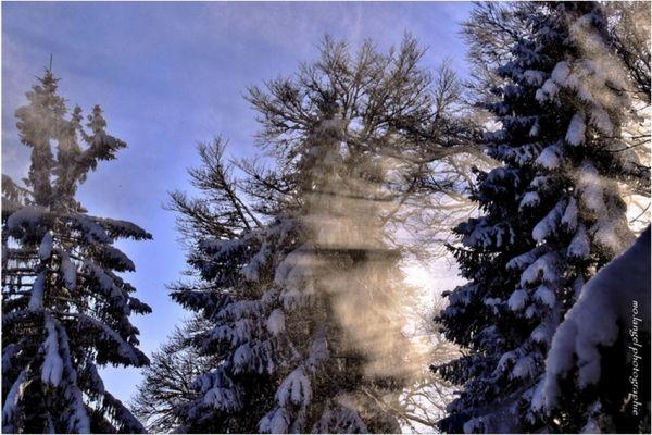 Bonne année     * 2011 *    Happy new year