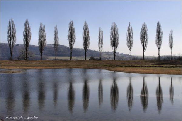 Reflets sur l'étang
