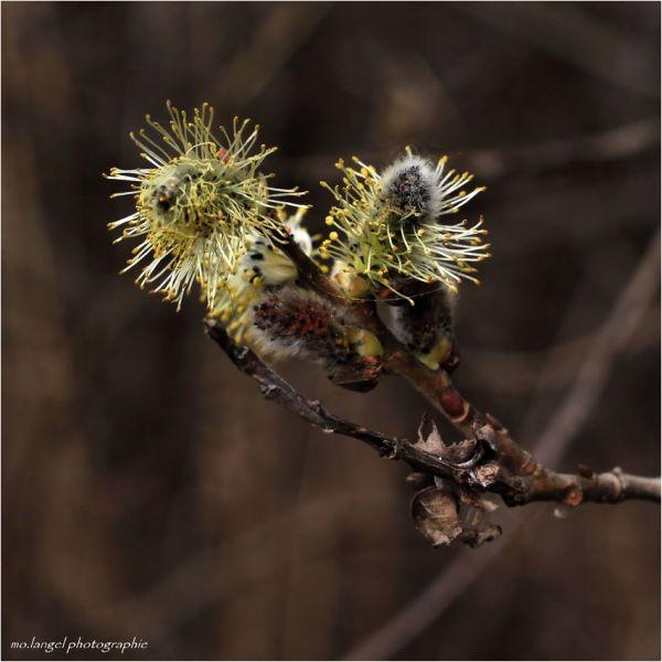 L'explosion du printemps