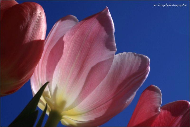 Les couleurs du printemps