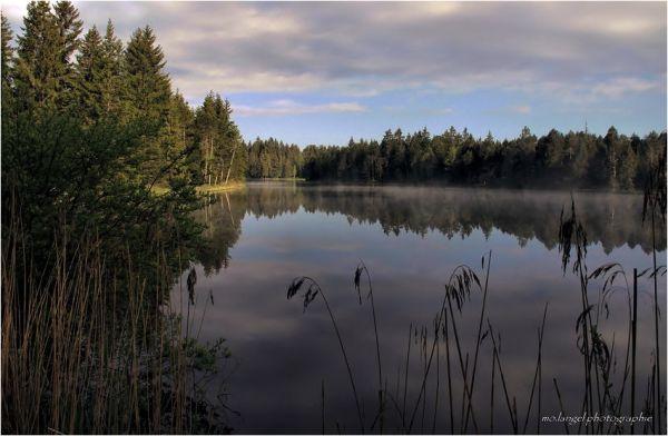 Un matin à l'étang