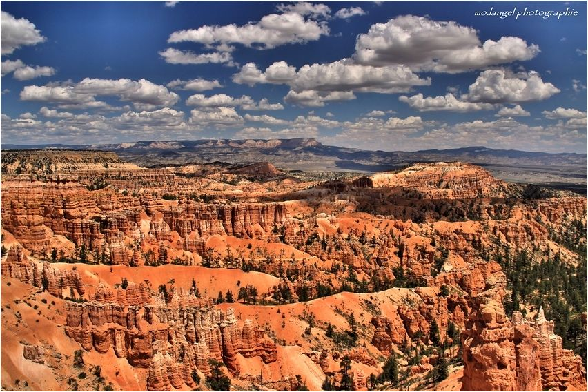 La forêt de roches