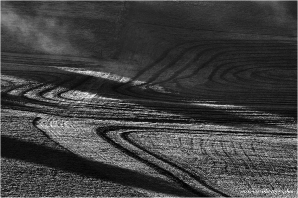 Les champs sous la lumière matinale
