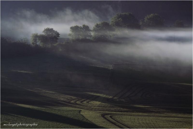 Brume dans les champs