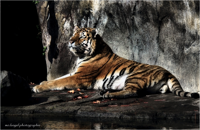 The Tiger #3