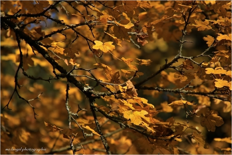 Couleurs d'automne #3