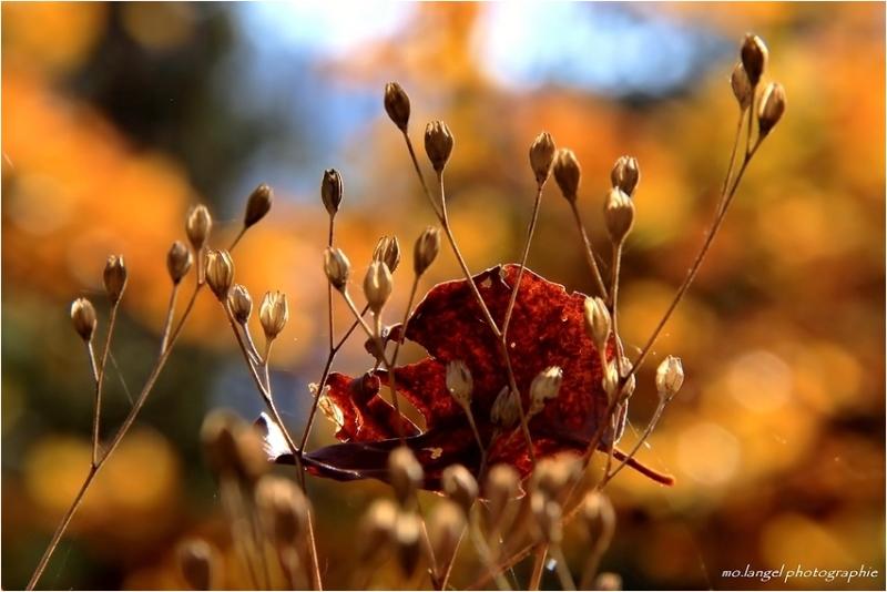 Couleurs d'automne #4