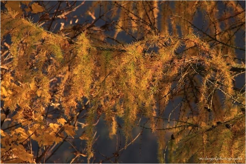 Couleurs d'automne #5
