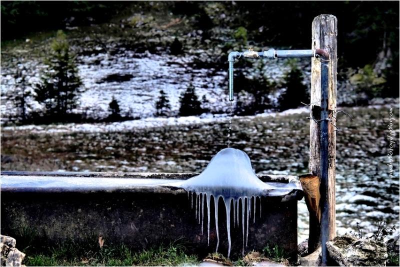 La fontaine et le poulpe