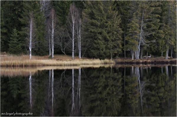 Miroir de l'étang