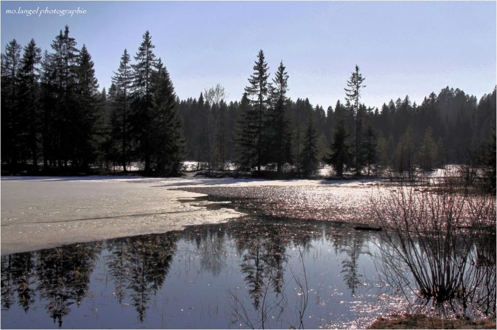 L'étang se réveille