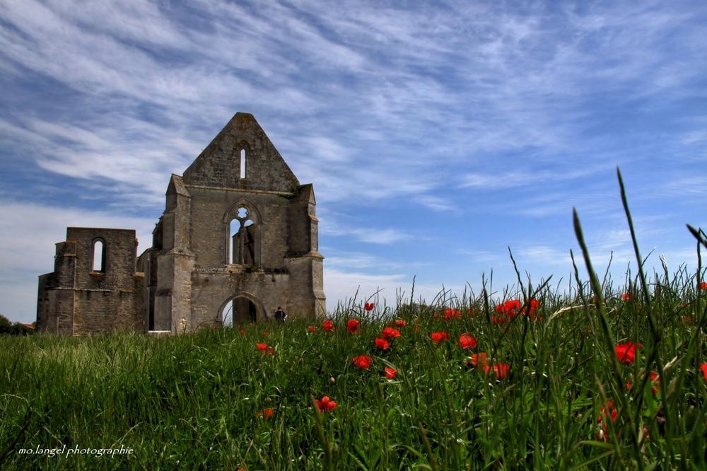 Ruines et coquelicots