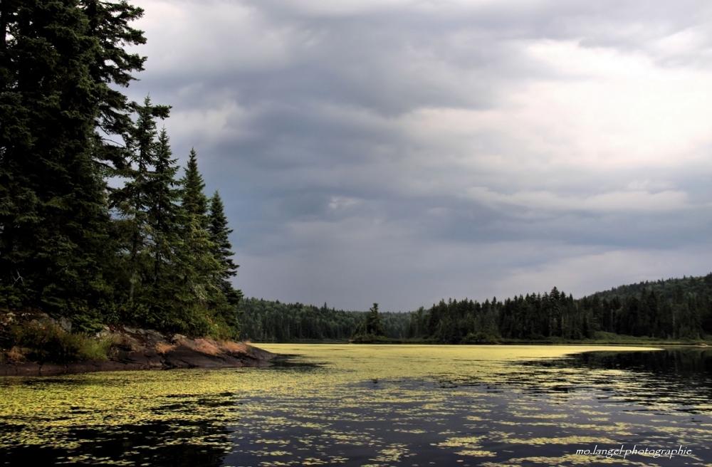 Le lac fleuri
