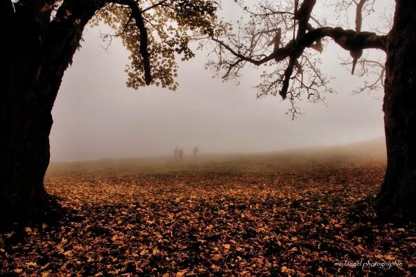 Perdus dans le brouillard
