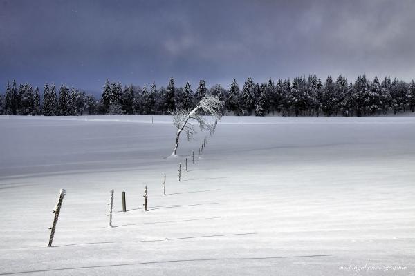Balade hivernale #2