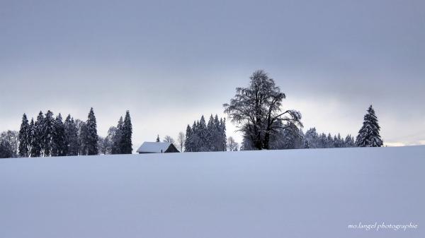 Balade hivernale #3