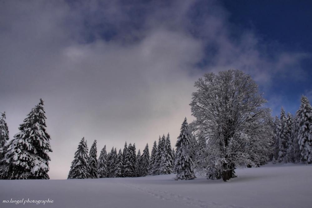 Balade hivernale #5