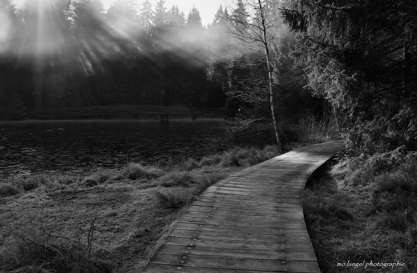 Le chemin de bois