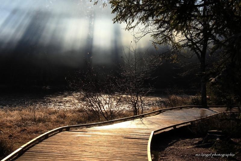 Les rayons dans la brume