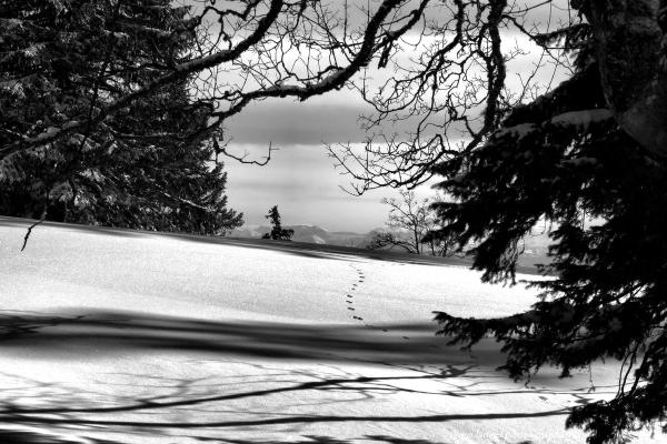 Sur le chemin de la Vue-des-Alpes
