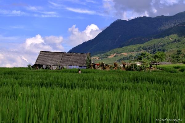 La petite fille de la rizière