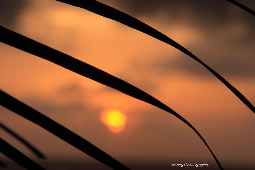 Lever du soleil sous les palmes