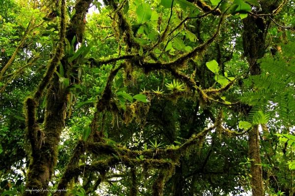 ... Et là haut dans les branches ...