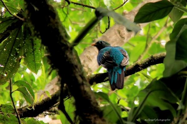 ... et Madame Quetzal