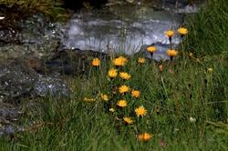 Le petit ruisseau de montagne