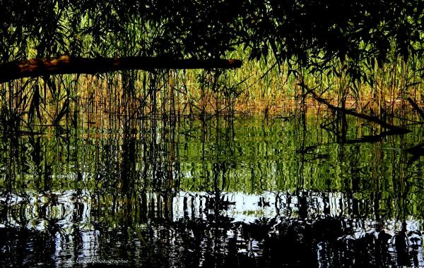 Le rideau de reflets