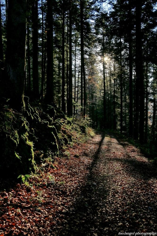 Promenons-nous dans les bois