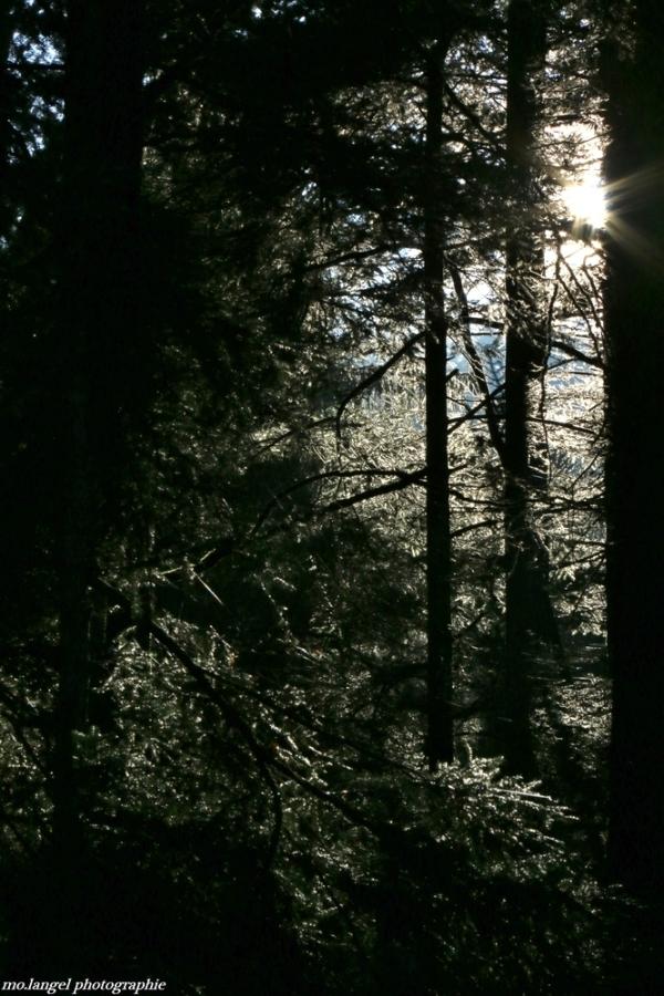 Lumière sylvestre